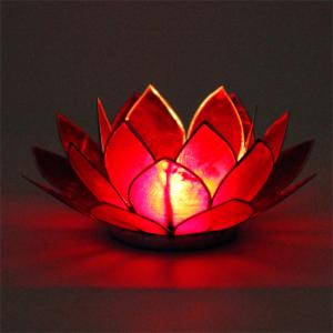 kwiat lotosu 1 czakra irn